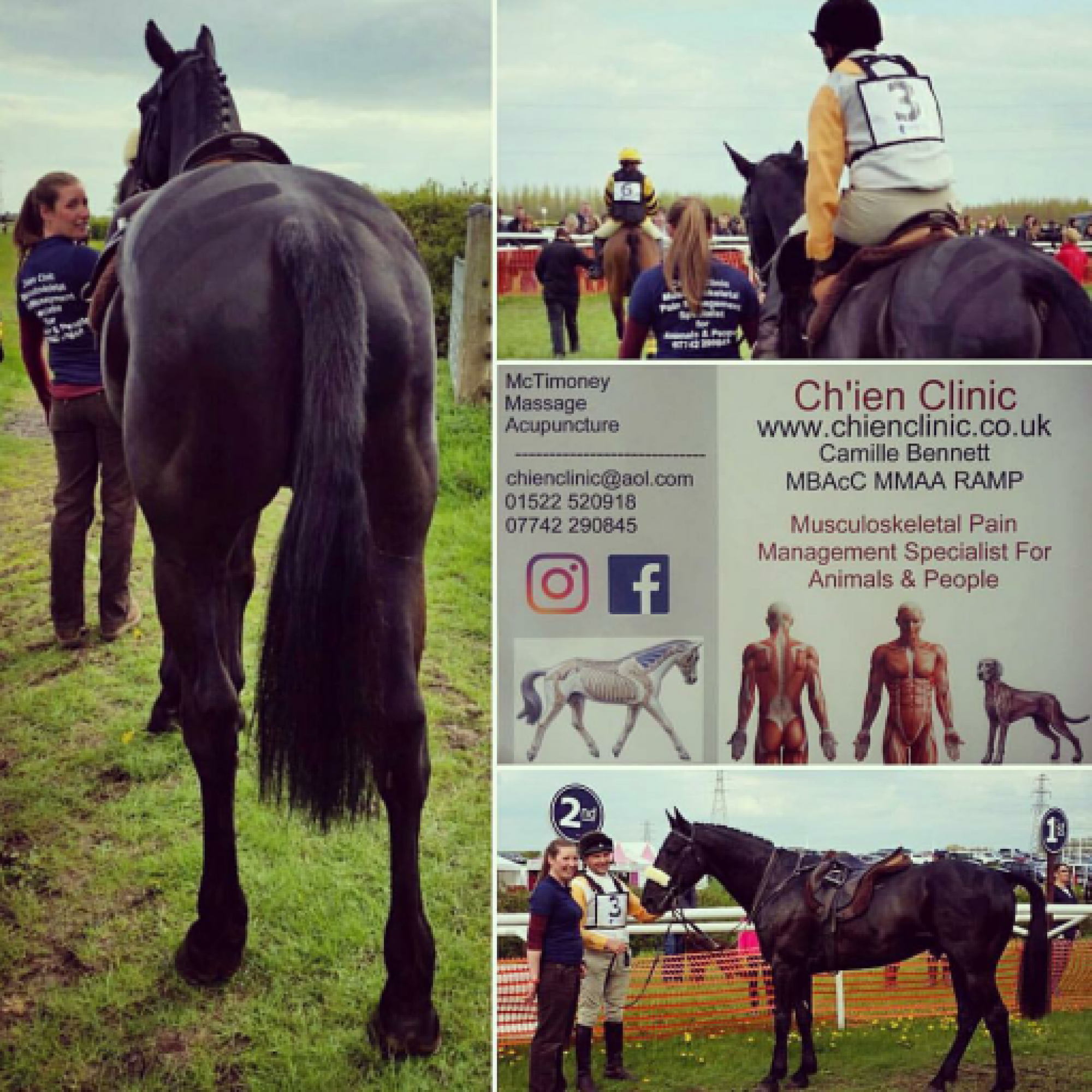 Lincolnshire Equine and Canine Chiropractic